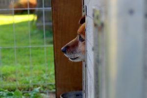 animal-shelter-1558651_1280