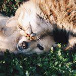 【譲渡会】これから犬を飼おうと思ってる人へ 出会いの場はたくさんあるよ!!