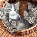 【子猫リレー事業】キトンシッターについて問い合わせ先は?