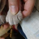 仔犬の爪切り