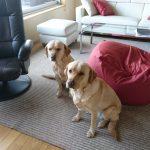 【香川県】大型犬とゆったりお泊りできる宿〈屋島の宿桃太郎〉