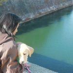 犬を飼ったことがない!だけどラブラドール・レトリーバーと暮らしたいあなた。パピーウォーカーって知ってる?