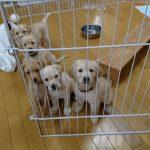 【ブリーディングウォーカー】子犬たち元気でね!