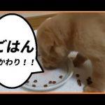 【YouTube動画】モリモリ食べるよ!