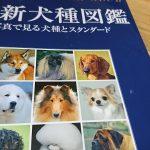 犬をはじめて飼う人へ。犬種の特徴は参考程度にしておきましょう。
