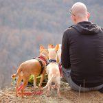 地震や災害のとき、ペットを連れて避難する場所はあるのか?