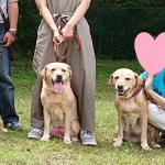盲導犬候補犬「僕ちゃん」の入所式