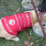 【やーちゃんの備忘録】パピー編 仔犬の社会化
